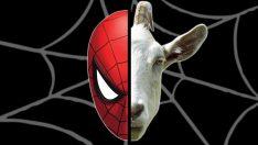 Örümcek Keçi Deneyi