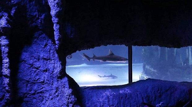 Akvaryumdaki köpek balığı