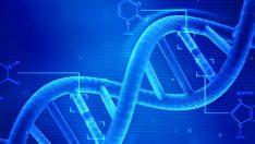 Genetik Mühendisliği Ve Gen Aktarımı Nedir?