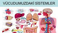 İnsan Anatomisi Ve Fizyolojisi: Sistemler