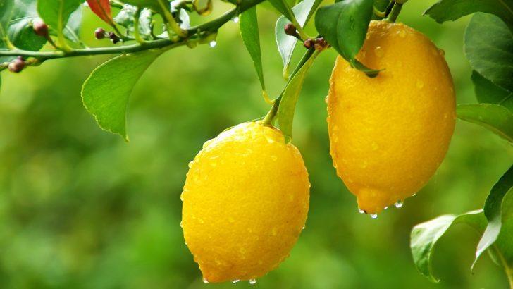 Limon İle Kişilik Testi