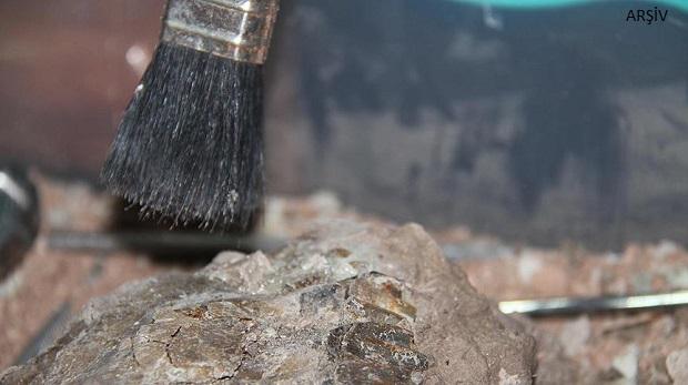 meyve fosili bulundu