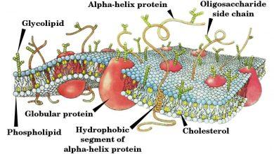 Photo of Bakteri Hücre Duvarı Yapısı