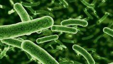 Bakterilerin Üremesine Etki Eden Faktörler