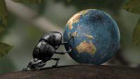 Bok Böceği Nedir?