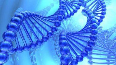 Photo of DNA Onarımının Kritik Bileşeni Bulundu