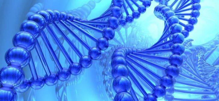 cDNA Kütüphanesi Nedir?