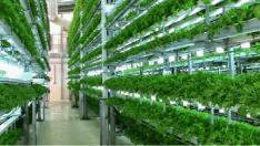 Tarımda Yenilikçi Bir Sistem: Dikey Tarım
