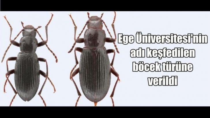 Ege Üniversitesi Böceği