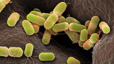 Prokaryotların Kanser Tedavisinde Rolü