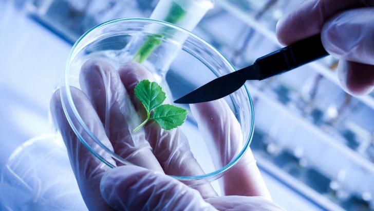Biyoteknoloji Nedir?
