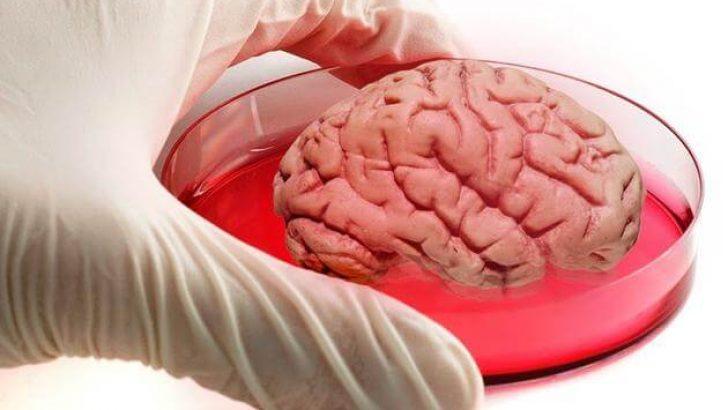 Bilim Adamları Yapay Beyin Üretti