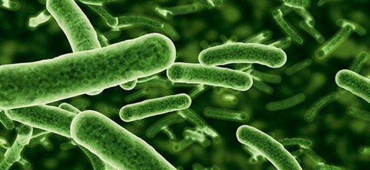 Petrol Yiyen Bakteriler