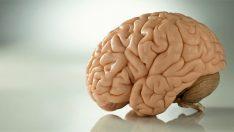 Sessizlik Beynimizde Yeni Hücrelerin Oluşmasını Sağlıyor!