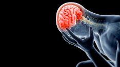Beynimizde Kaslarımız Gibi Yorulur Mu?