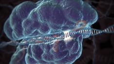 DNA Onarım Mekanizmalarına Katılan Genler