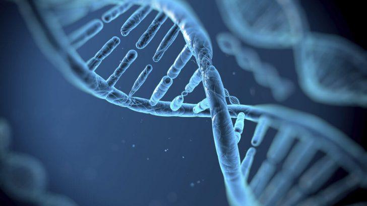 Gen Ekspresyonu Nedir?