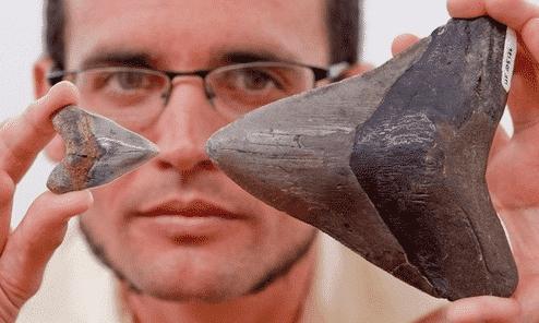 megalodon dişleri