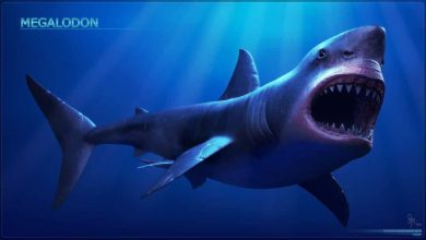 Photo of Megalodon Nedir?