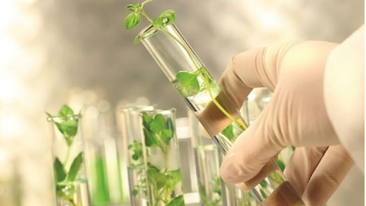Biyoteknoloji Ve Bitki Doku Kültürü