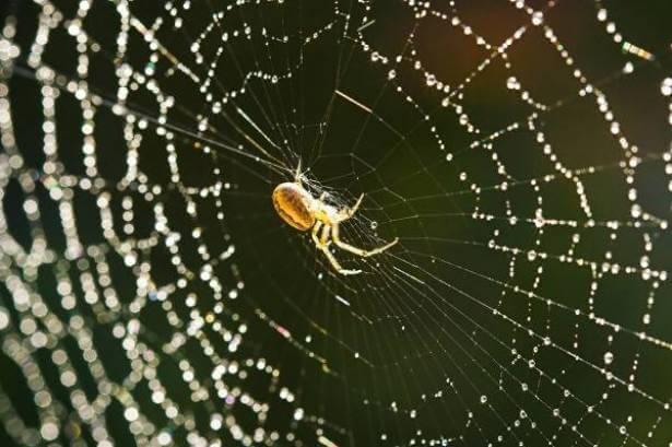 Photo of Örümcek İpeğinin Tıpta Kullanımı