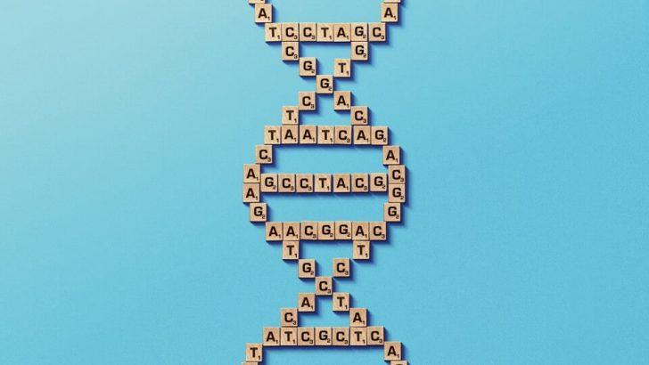 Bilim İnsanları DNA'nın Temellerini Değiştirerek Yeni Bir Yaşam Formu Yaratıyor