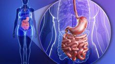 Sindirim (Gastrointestinal) Sisteminin Mikroflorası