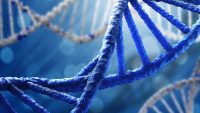 CTLA4 Geninde Meydana Gelen Otoimmün Sistem Mutasyonları