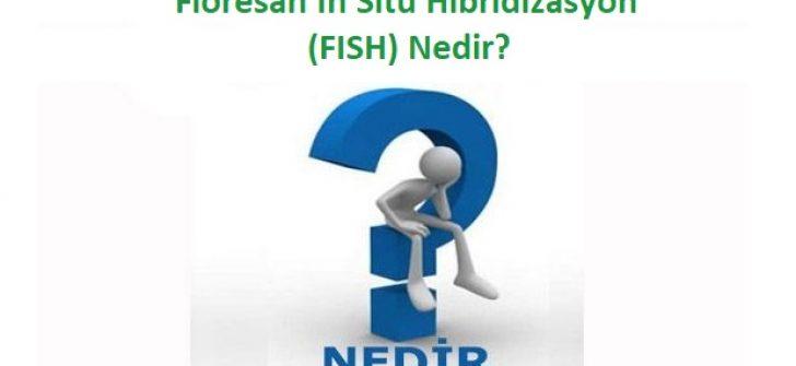Floresan In Situ Hibridizasyon (FISH) Nedir?