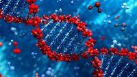 TP53 Genindeki Mutasyonun Elektroforez İle İncelenmesi