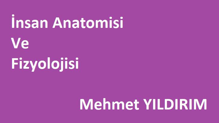 İnsan Anatomisi Mehmet Yıldırım [PDF]