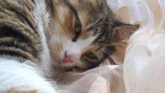 Kedi Miyavlaması Sendromu Nedir? (Cri du chat sendromu)