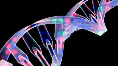 Photo of Gen Mutasyonu Sayesinde Acı Hissedilmiyor