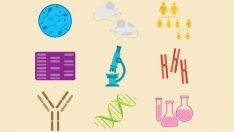 Moleküler Biyoloji Ve Genetik Bölümü