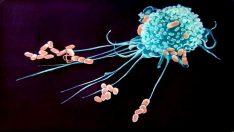 Makrofaj Nedir?
