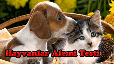 Photo of Hayvanlar Alemi Testi