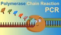 PCR'ın Keşfi ve 1993 Kimya Nobel Ödülü