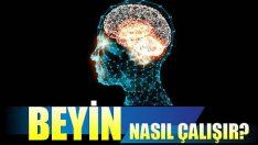 Beyin Nasıl Çalışır?