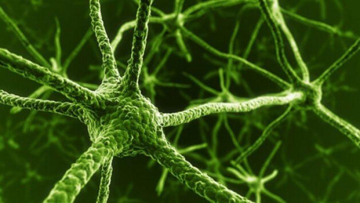 Kan Hücreleri Beyin Hücresine Dönüştürüldü