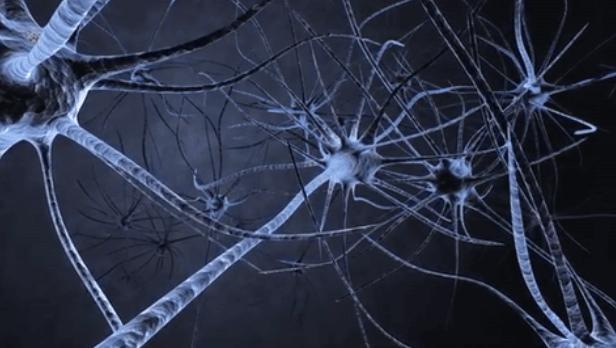nöron hücresi