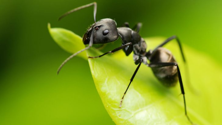 Karıncaların Gizemli Dünyası