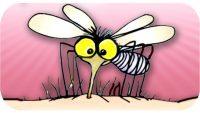 Sivrisineksiz Bir Dünya Nasıl Olur?