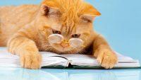 Fizik Makalesi Yazarı Kedi Chester Willard