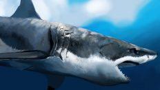 Büyük Beyaz Köpek Balığı