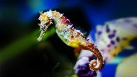 Denizatları ve Genel Özellikleri