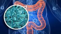 Bağırsak Mikrobiyotamız Hastalıklarımızı Belirliyor!