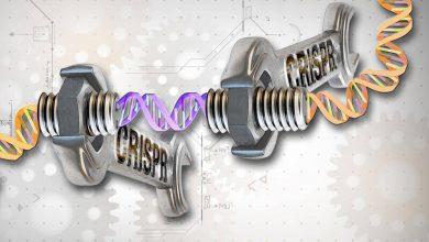 Photo of CRISPR-SKIP Nedir?
