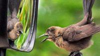 Hayvanlar Aynadaki Görüntülerini Tanıyabilir Mi?