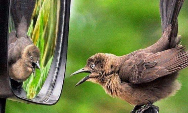Hayvanlar Aynada Kendilerini Tanıyabilir Mi