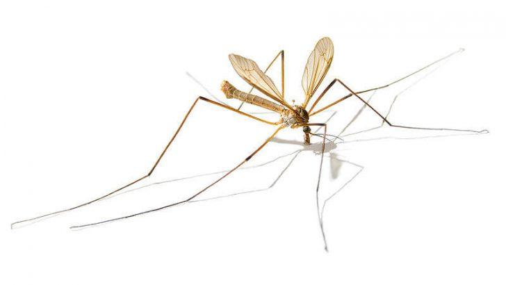 Sıtma Hastalığı Nedir?